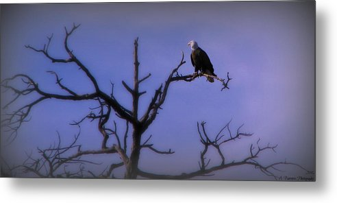 Bald Eagle Metal Print featuring the photograph Watson Lake Bald Eagle by Aaron Burrows