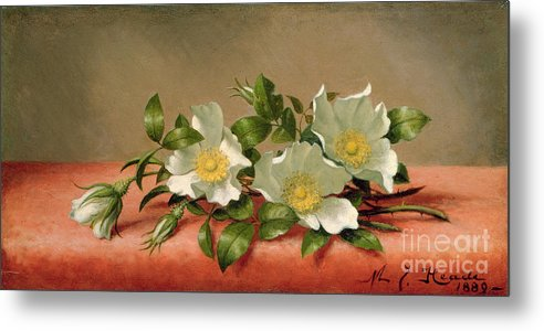 Cherokee Roses Metal Print featuring the painting Cherokee Roses by Martin Johnson Heade