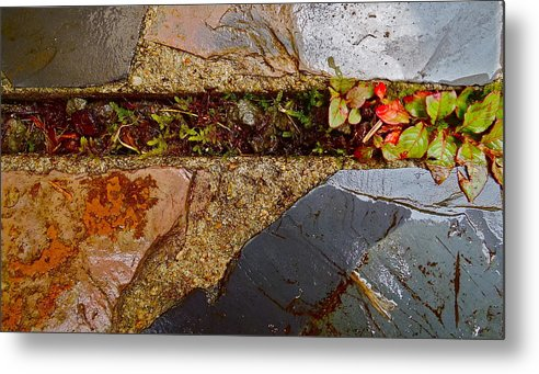 Macro Metal Print featuring the photograph Yard by Rob Michels