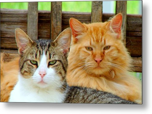 Cats Metal Print featuring the photograph Oscar And Red by J R Seymour