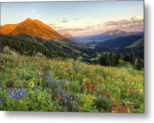 Wildflowers Metal Print featuring the photograph Wildflower Moonrise by JC Leacock