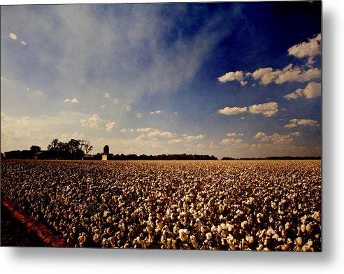 Cotton Metal Print featuring the photograph Cotton Field by Scott Pellegrin