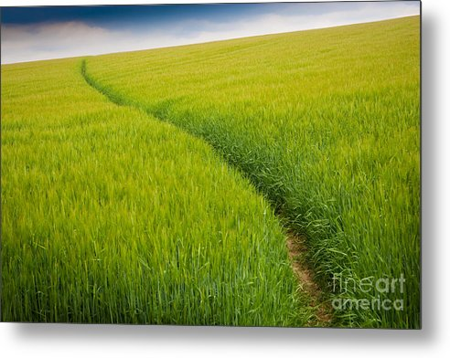 Photograph Metal Print featuring the photograph Green Field by Michael Hudson