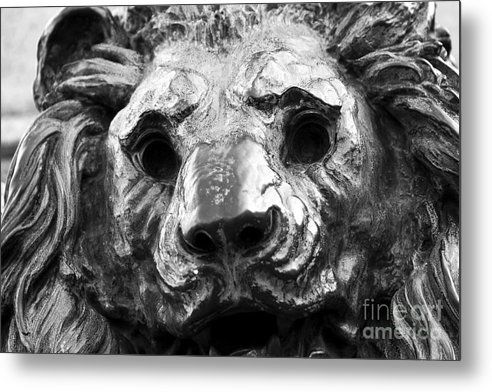 Lion Head Metal Print featuring the photograph Lion Head by John Rizzuto