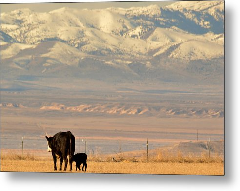 Ranch Metal Print featuring the photograph Hey Mom.. Wait Up by Al Swasey