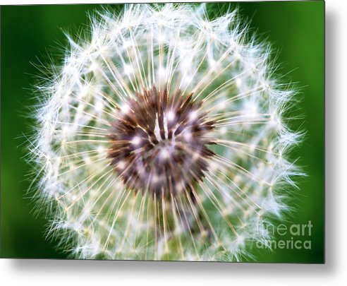 Sparkle Metal Print featuring the photograph Sparkle by John Rizzuto
