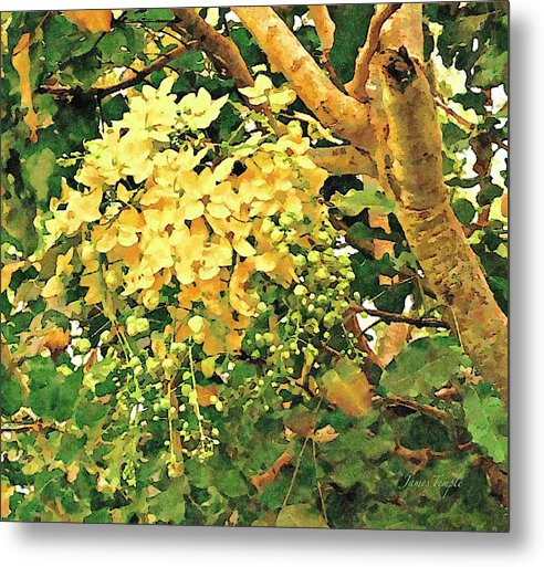 Golden Shower Tree Metal Print featuring the digital art Summer Mornings by James Temple