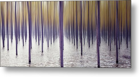 Tranquility Metal Print featuring the photograph Climate Change by Iñaki De Luis