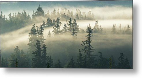 Fog Metal Print featuring the photograph Castles In The Fog by Manju Shekhar