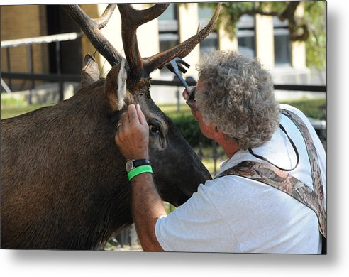 Deer Metal Print featuring the photograph An Artist by Leon Hollins III