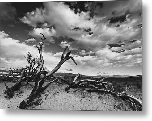 Landscape Metal Print featuring the photograph Dead Trees at Mesquite Dunes by Nathan Spotts