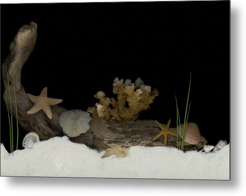 Shells Metal Print featuring the mixed media Down Under by Sandi F Hutchins