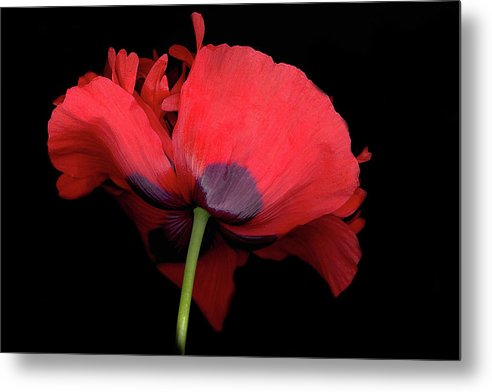 Red Poppy Metal Print featuring the digital art RED Poppy by Sandi F Hutchins
