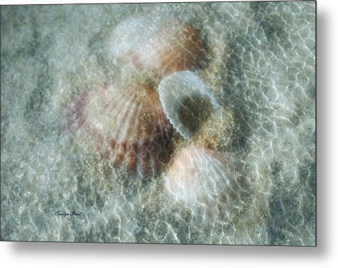 Shells Metal Print featuring the photograph Step Lightly by Carolyn Staut