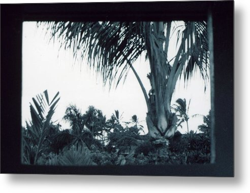 Palm Tree Metal Print featuring the photograph Window To Paradise by Jennifer Ott