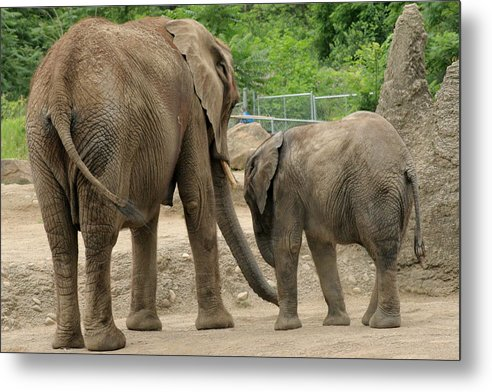 Elephant Metal Print featuring the photograph A Mothers Love by ShadowWalker RavenEyes Dibler