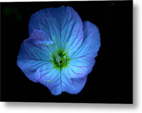 Flower Metal Print featuring the photograph Black And Blue by Keri Clarke