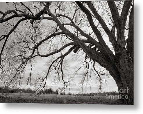 Nature Metal Print featuring the photograph Elm #5 by Lionel F Stevenson