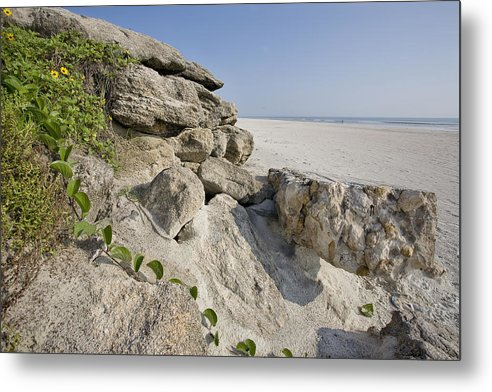 Flowers Metal Print featuring the photograph Flowers On The Beach by Bill Linhares