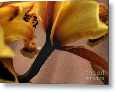 Orchid Metal Print featuring the photograph Orchid Yellow by Michael Ziegler