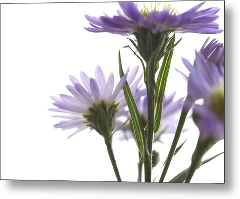 Flowers Metal Print featuring the photograph Flower Abstract by Jessica Wakefield