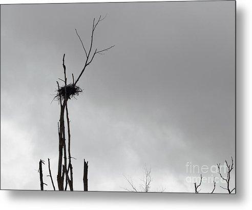 Bird Nest Metal Print featuring the photograph Home by Josh Baldo