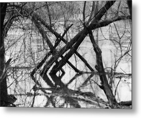 Photography Metal Print featuring the photograph Tree Line by Cynthia Ann Swan