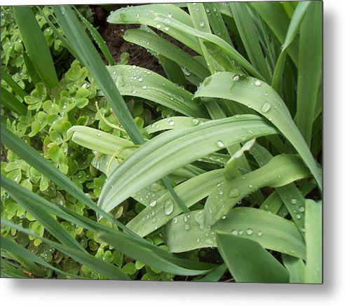 Green Metal Print featuring the photograph Green Leaves by Galina Todorova