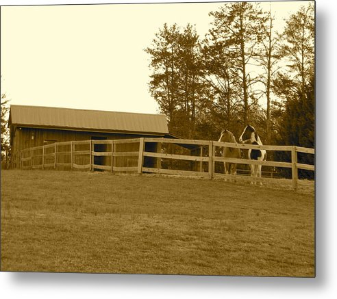 Metal Print featuring the photograph Horses by Frank Conrad