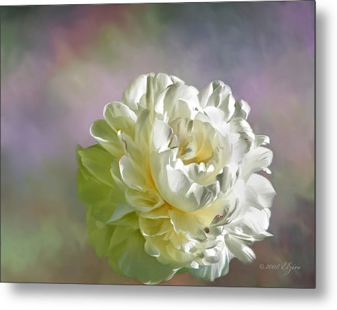 White Peony Metal Print featuring the painting Lacy by Elzire S