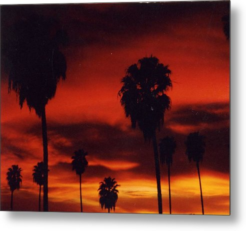 Palm Trees Metal Print featuring the photograph Hollywood Sunset by Jennifer Ott