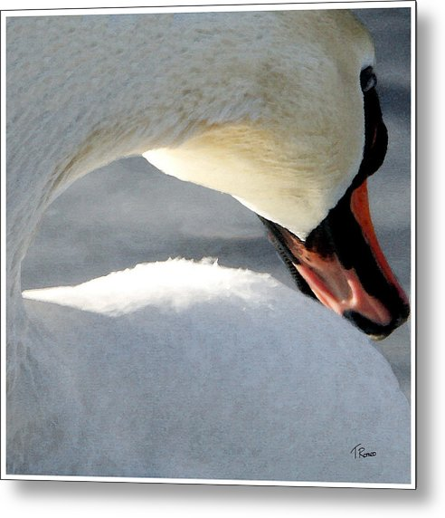 Swan Metal Print featuring the digital art Cold Shoulder by Tom Romeo