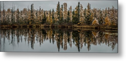 Tamarack Metal Print featuring the photograph Pond Reflections by Paul Freidlund