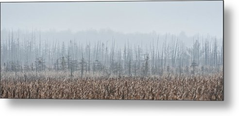 Marsh Metal Print featuring the photograph Stratum by Terry Hrynyk