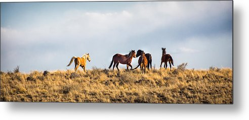 Fine Art Metal Print featuring the photograph Wild Horses On The Bisti by Darby Donaho