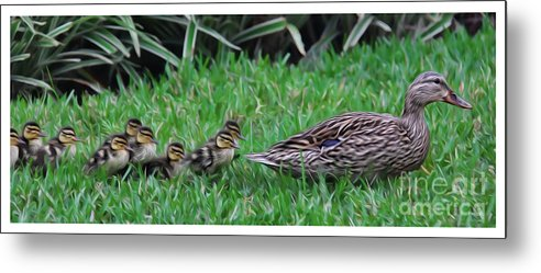 Make Way For The Ducklings Metal Print featuring the photograph Following Mommy by Lee Dos Santos