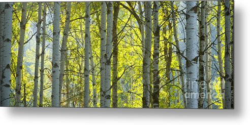Trees Metal Print featuring the photograph Autumn Through The Trees by Idaho Scenic Images Linda Lantzy