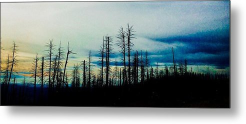Pine Trees Metal Print featuring the photograph The Morning Burn by Jennifer Lake