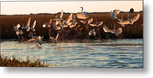 Egret Metal Print featuring the photograph Egret And Ibis Party by Jennifer Stockman