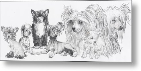 Toy Group Metal Print featuring the drawing Growing Up Chinese Crested And Powderpuff by Barbara Keith