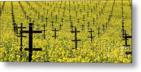 Vineyard Metal Print featuring the photograph Mustard Color In The Vineyard Napa Ca. by Jon Cretarolo