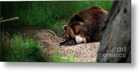 Bear Metal Print featuring the photograph Hibernate by Connor Hauenstein