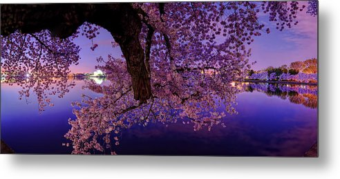 Dc Metal Print featuring the photograph Night Blossoms by Metro DC Photography