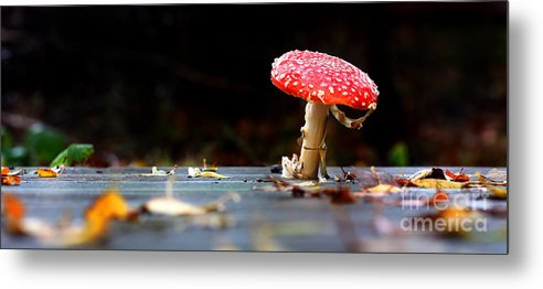 Autumn Metal Print featuring the photograph Wild Toadstool by Simon Bratt Photography LRPS