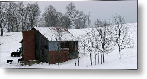 Barn Metal Print featuring the photograph Coming Home by Joseph Battaglia