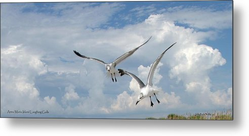 Flying Metal Print featuring the photograph Anna Maria Laughing Gulls by Judy Waller