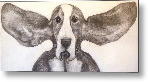 Basset Hound Metal Print featuring the drawing Fly Dog by Rebecca Robinson
