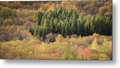 Autumn Metal Print featuring the photograph Autumn2 by Luigi Barbano BARBANO LLC