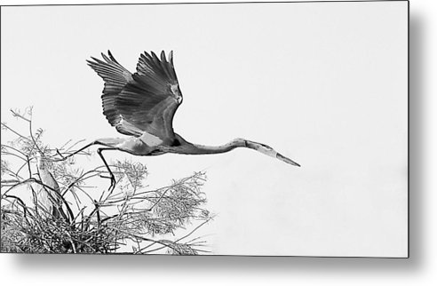 Metal Print featuring the photograph On The Wing by Joseph Reilly