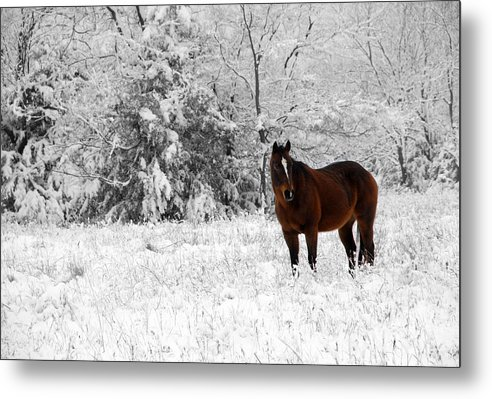 Snow Metal Print featuring the photograph Solitude by Jessica Wakefield